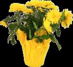Домашние цветы 19