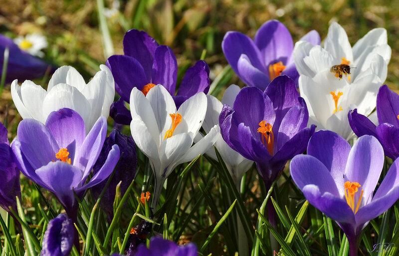 Колокола весны!