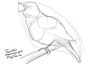 Как-нарисовать-соловья-карандашом-поэтапно-2.jpg