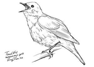 Как-нарисовать-соловья-карандашом-поэтапно-4.jpg