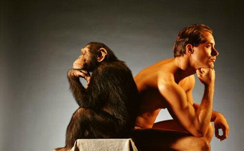 Обнаружен ВИЧ, который передается от обезьян к человеку