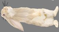 rabbit_1.png