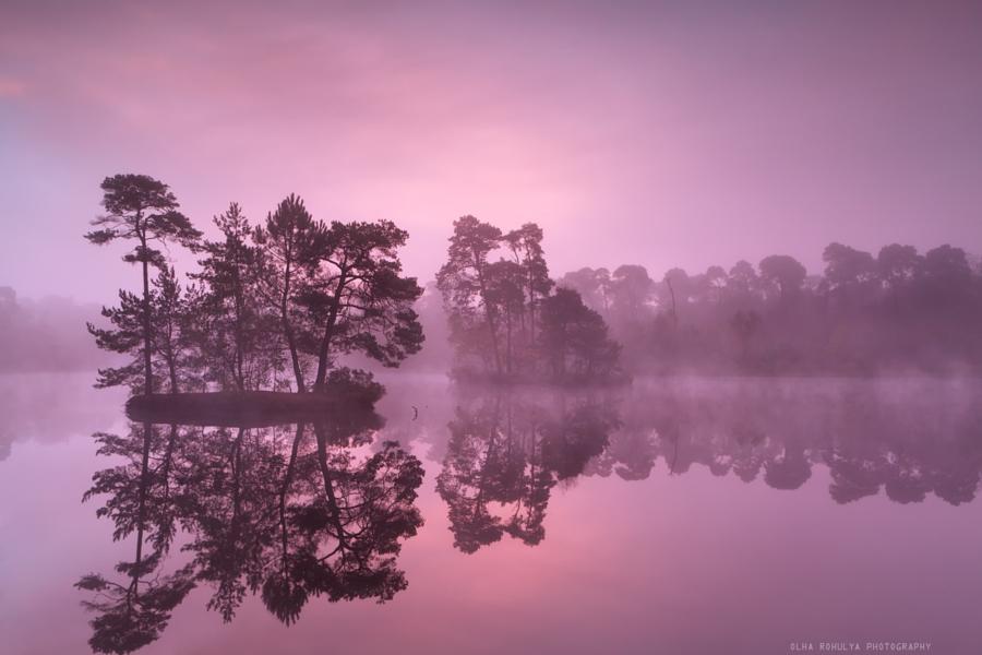красивое фиолетовое