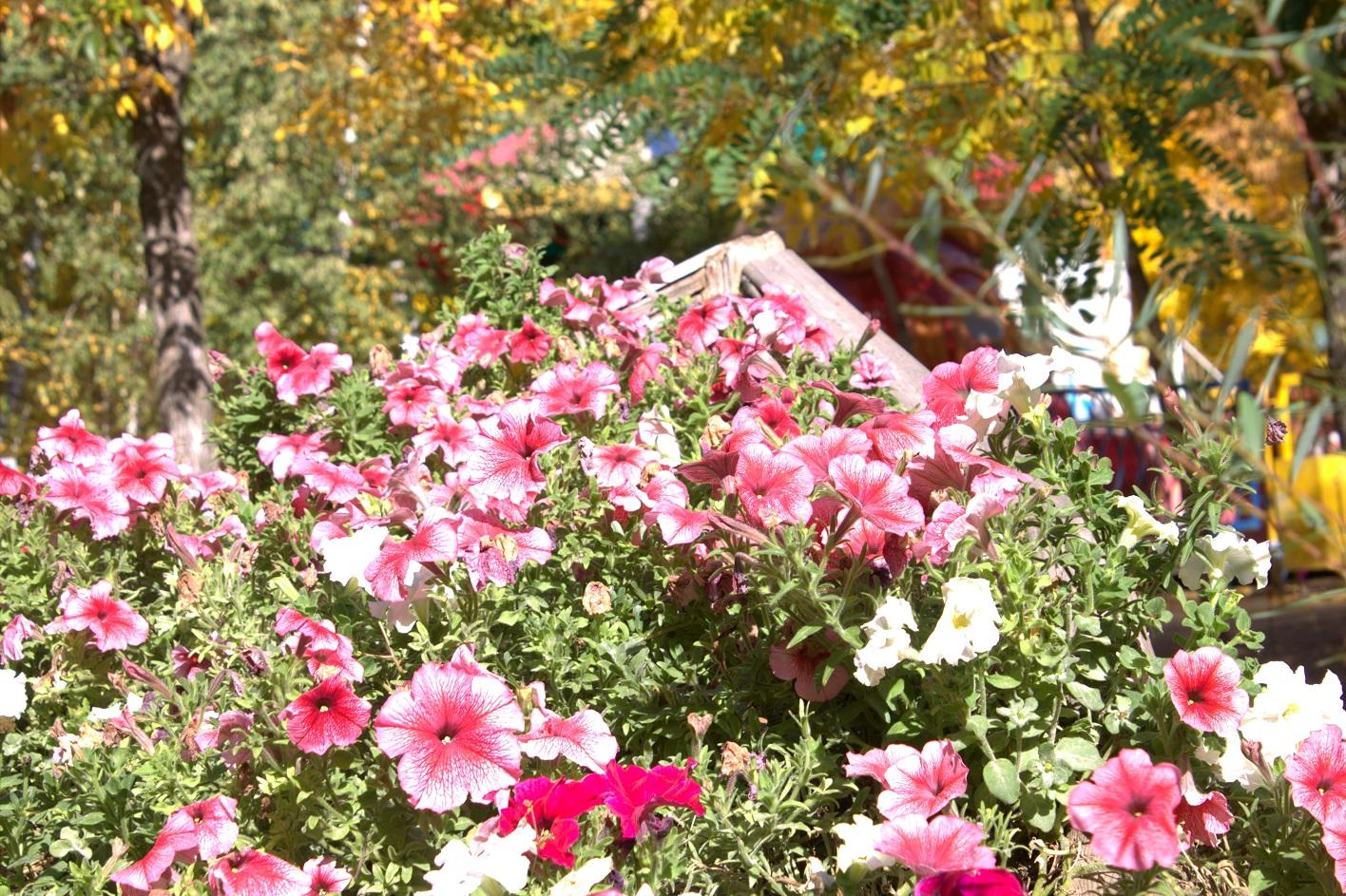 Лодка и цветы - парк ВГС - 5 октября 2016