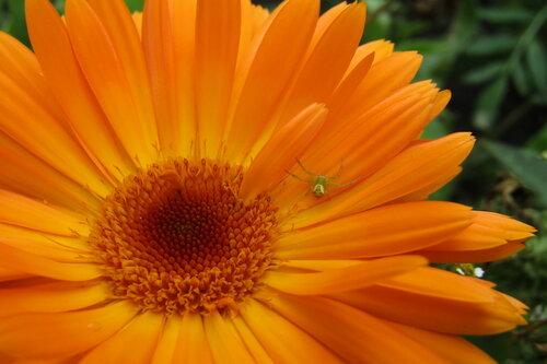 Цветочный житель