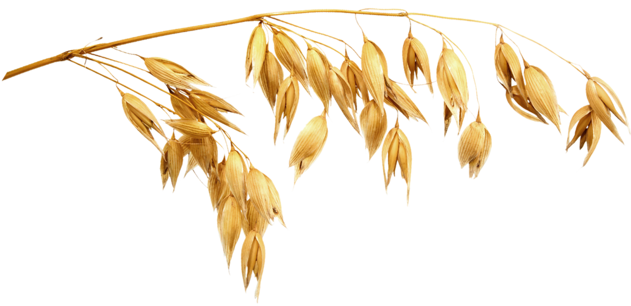 wheat staw.png