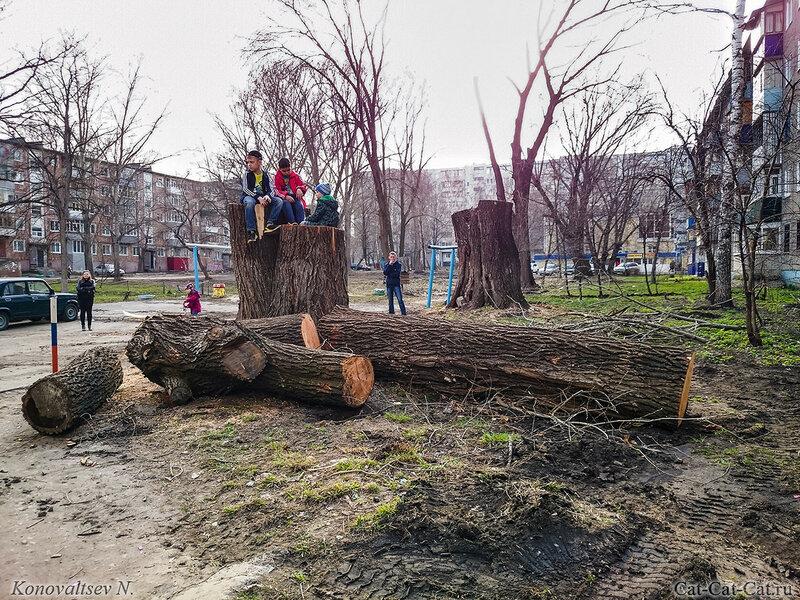 Спиленные деревья