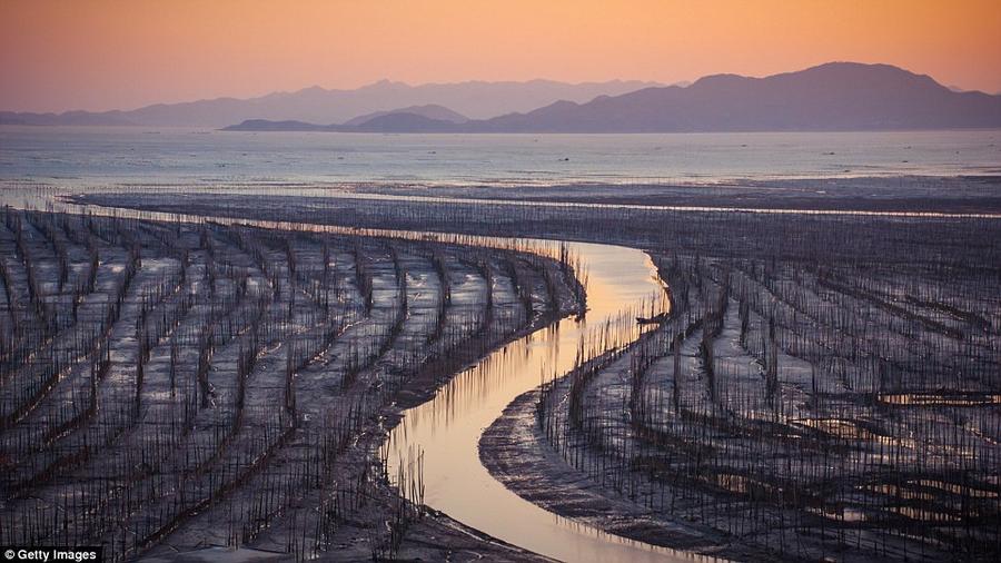 8. Заиленные берега в Сяпу, регионе на юго-востоке провинции Фуцзянь, которая известна традиционным
