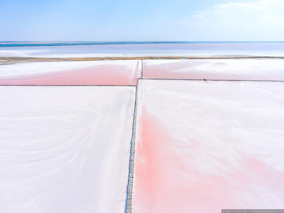 28. Но почему соль розовая? В крепкой рапе почти нет ничего живого. В ней способно выжить лишь