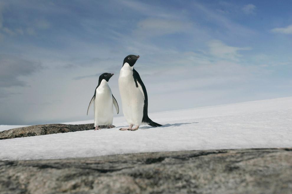 Ученые считают, что пока Море Росса почти не пострадало от человеческой деятельности.  6. Ки
