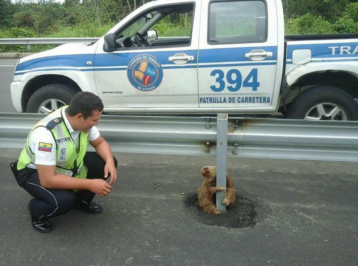 Полицейский спас испуганного ленивца (7 фото)