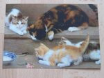 Картины с котиками