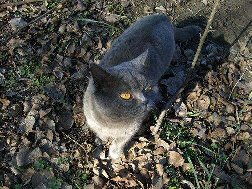 Кошка Бетси