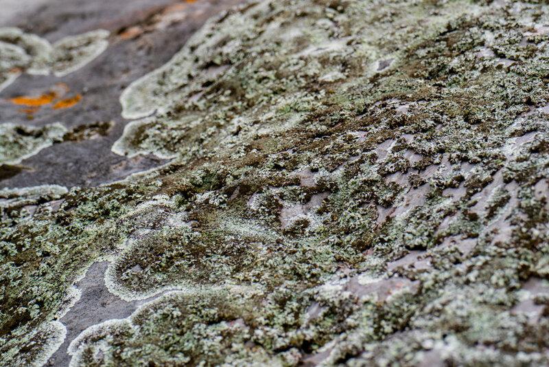 лишайник на камне у реки Исеть