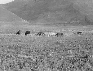 Лошади на выпасе