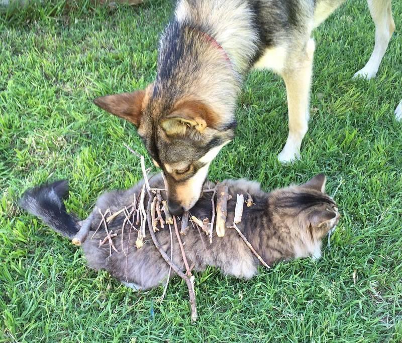 Пёс выбрал друга в приюте