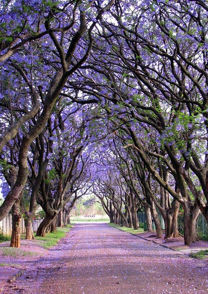 Великолепные коридоры из деревьев и цветов