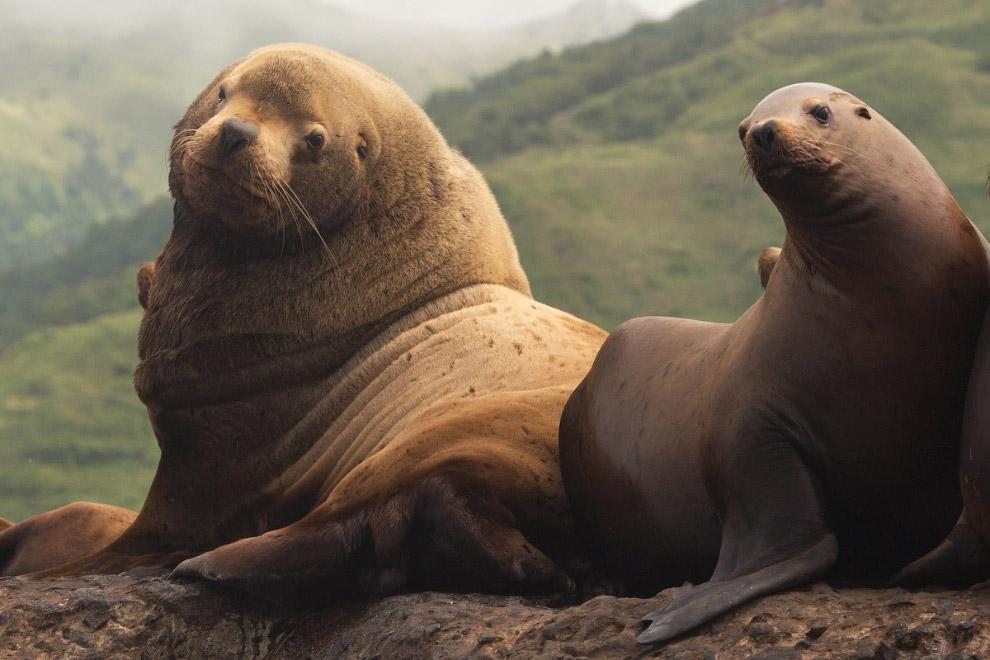 12. По словам Александра, путешествовать по миру ради фотографий дикой природы — это несложно,