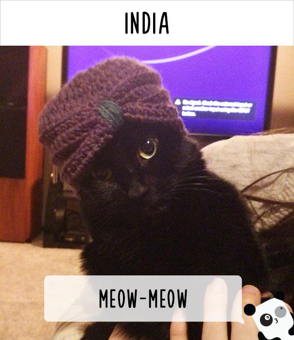 Индия — мяу-мяу-мяу.