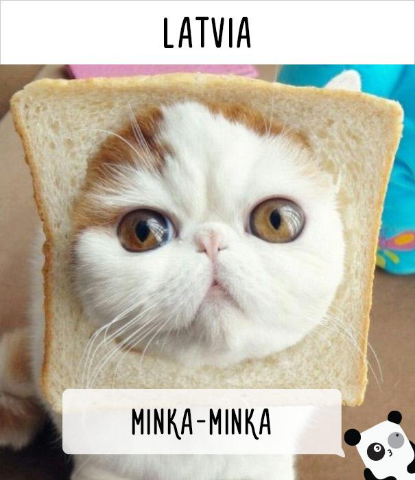 Латвия — минка-минка.