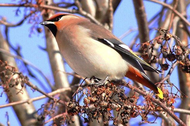 Коллекцию птиц вВоронежском заповеднике планируют восстановить вовтором летнем месяце