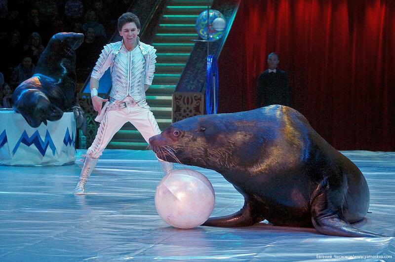 Цирк Никулина. Магия цирка. 21.02.17.49.Тимченко..jpg
