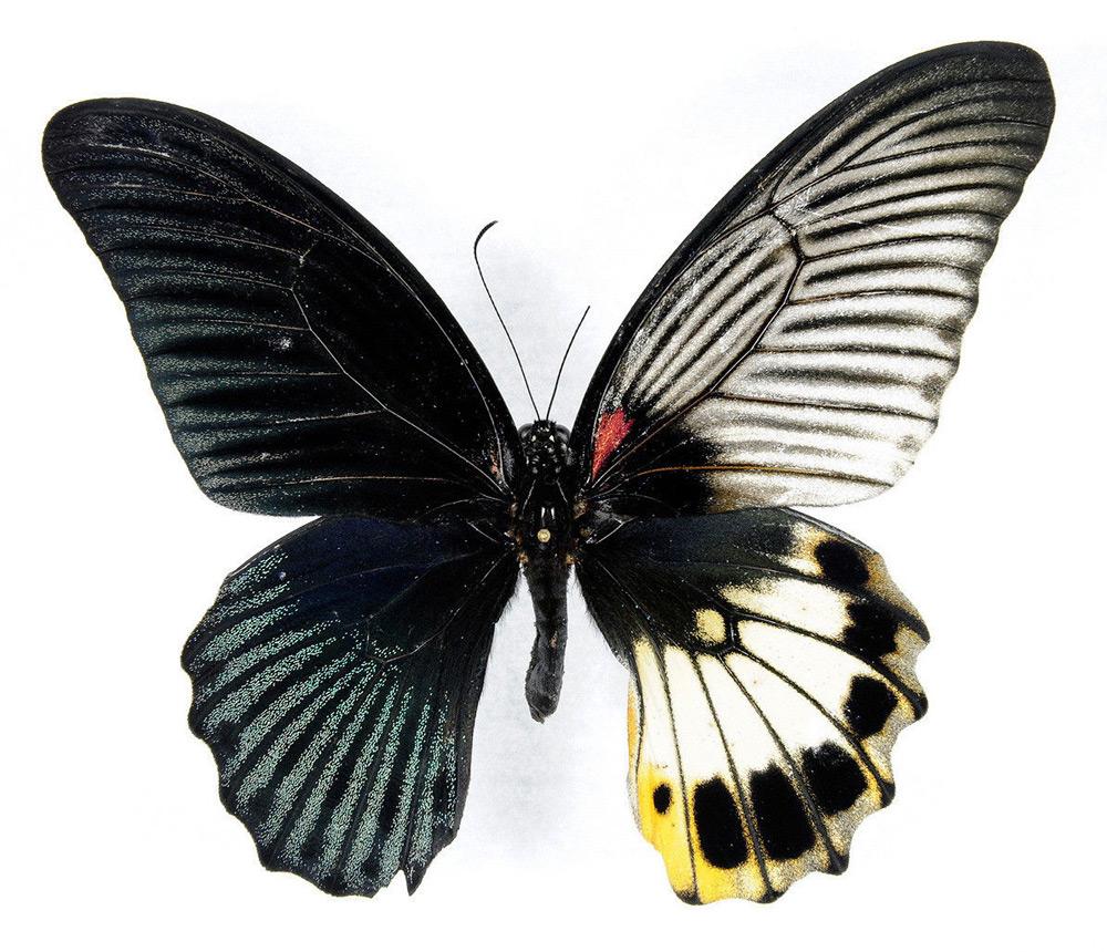 mybutterflybugs