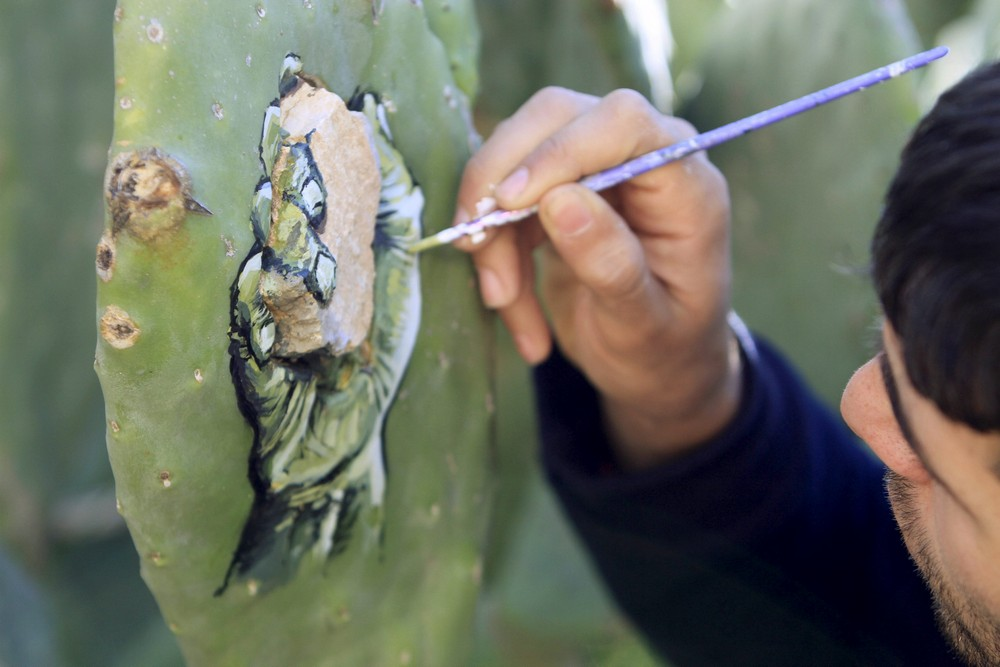 Palestinian artist Ahmad Yasin paints on a cactus fruits tree at his house garden in the West Bank village of Aseera Ashmaliya near Nablus