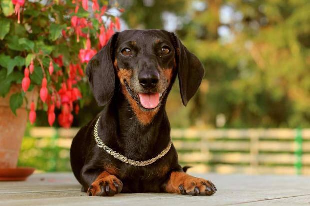 На российском курорте пара из Харькова потеряла собаку с украшениями на 400 тысяч