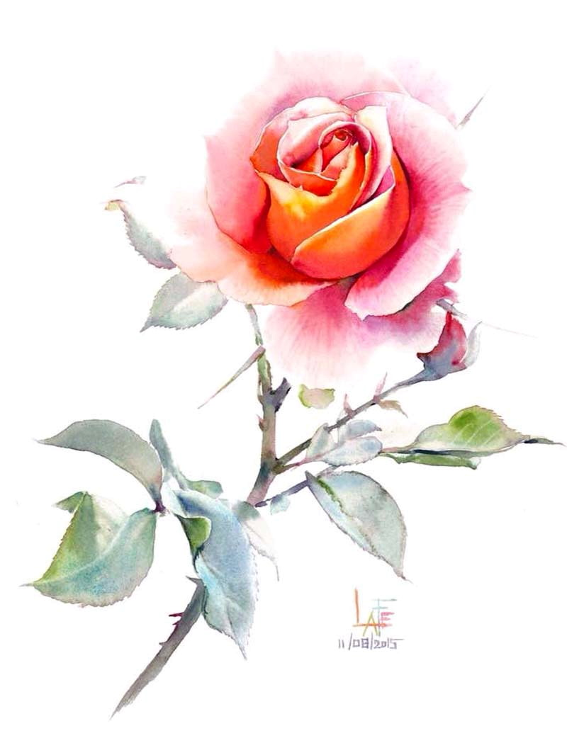 розы-40.jpg