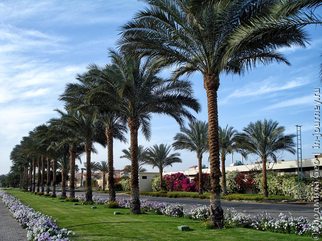 территория недалеко от отеля в египте