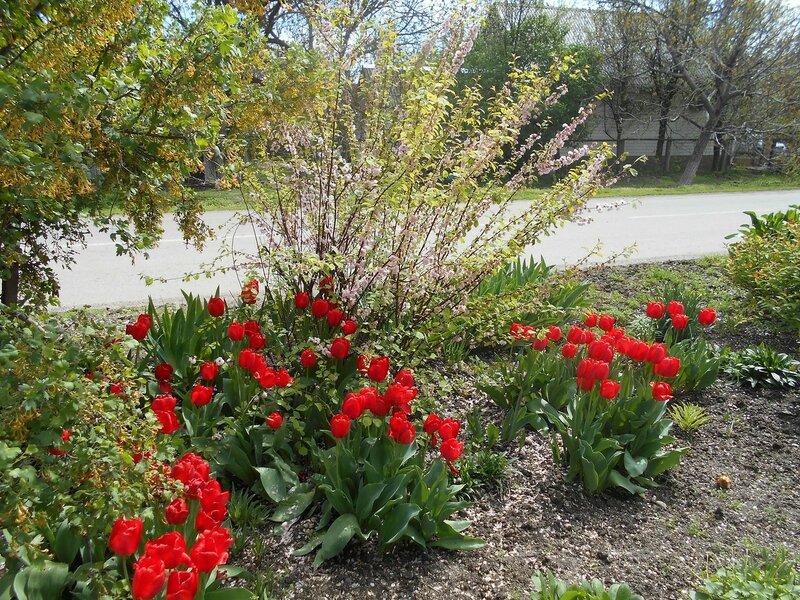 В апреле, цветы у дороги ... DSCN5196.JPG