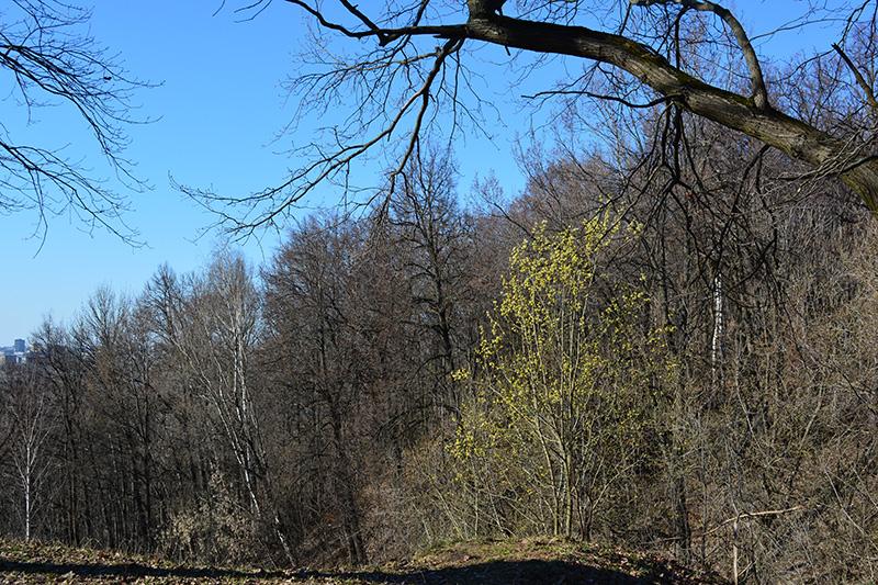 парк в апреле весна.jpg