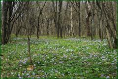 http://img-fotki.yandex.ru/get/60676/15842935.2ae/0_e23f1_130e9d69_orig.png