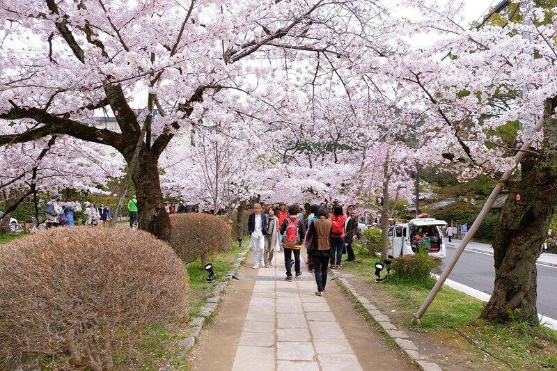 На улицах цветущего города. Киото
