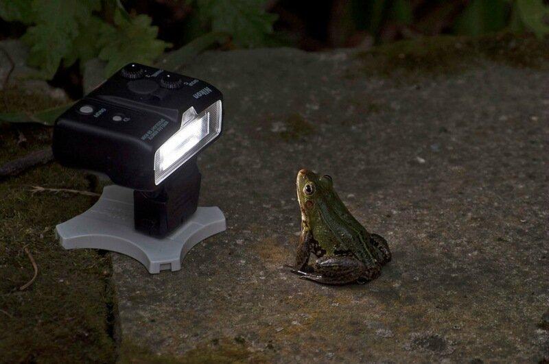 Comedy Wildlife Photography Awards   20 финалистов конкурса самых смешных фотографий дикой природы