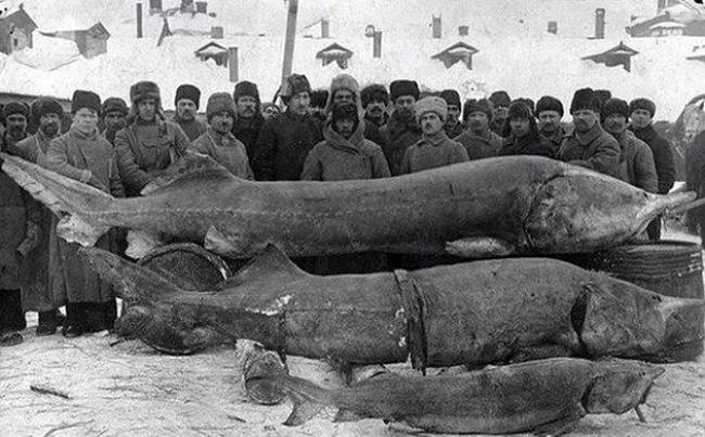 Удачная рыбалка, СССР, 1924 год.