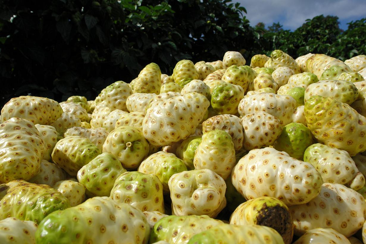 Моринда цитрусолистная (нони). Плод источает зловонный аромат, напоминающий запах испорченного з
