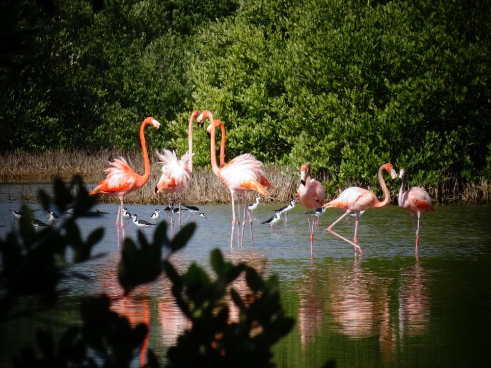 Национальный парк Сьенага-де-Сапата— самое подходящее место для наблюдения заптицами иживой приро