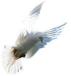 https://img-fotki.yandex.ru/get/60676/305445211.13e/0_151e35_510ed08f_orig