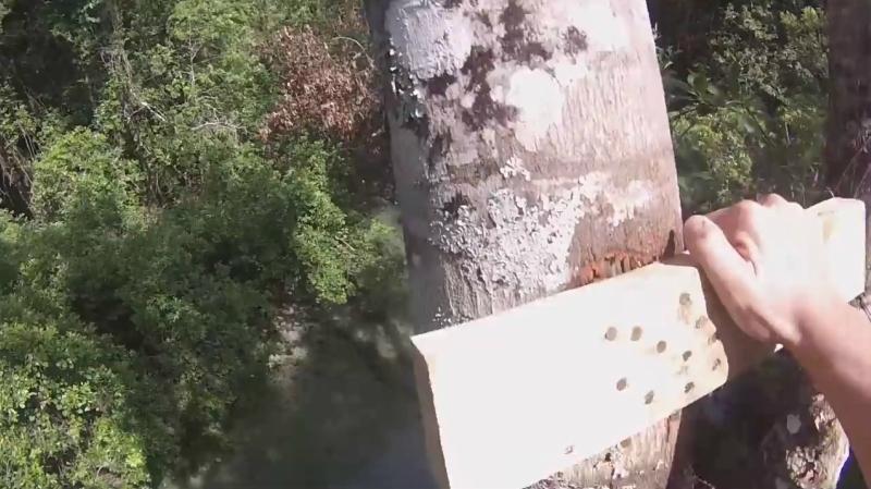 Слабо прыгнуть в реку с 18 метрового дерева?