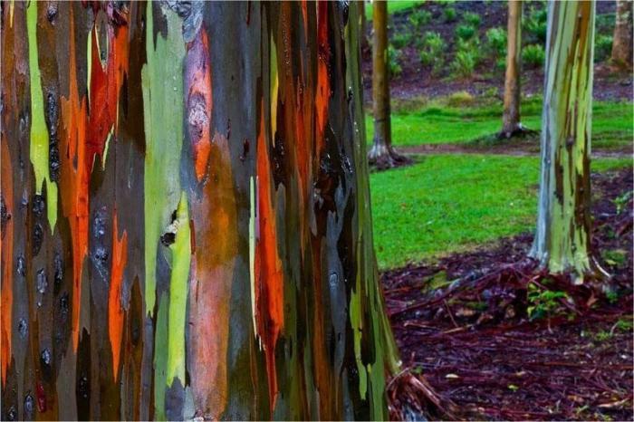Деревьев пост
