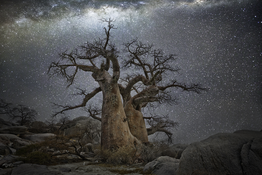 In this new series of striking images, San Francisco-based photographer Beth Moon ( previously ) cap