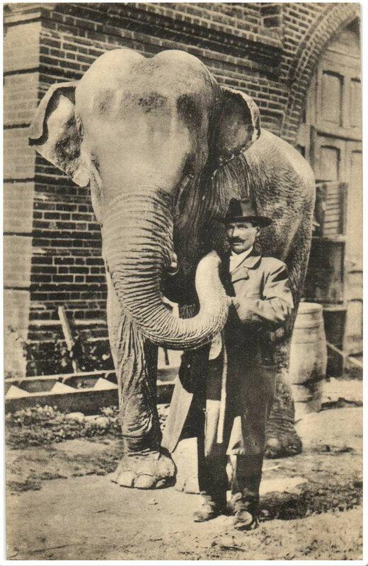 Слон. Шерер.jpg