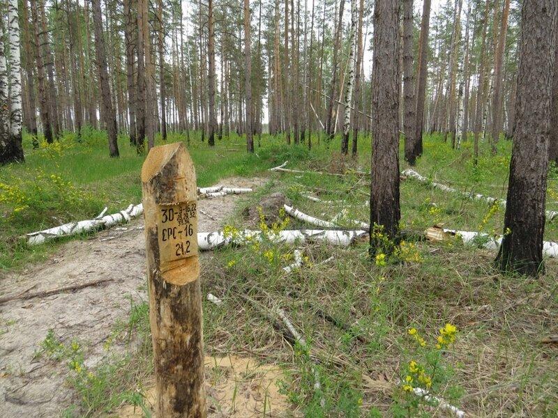 снимков для визира в лесу фото есть более