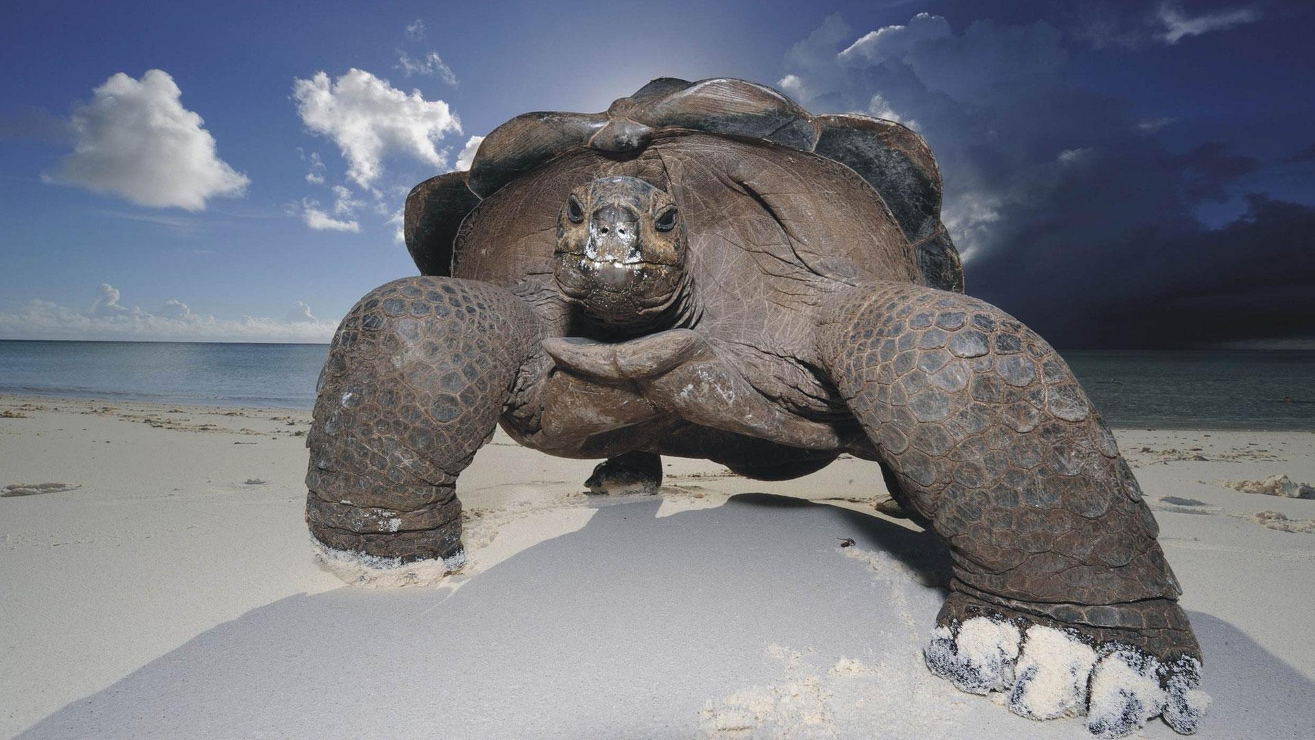 Гігантські черепахи нападають
