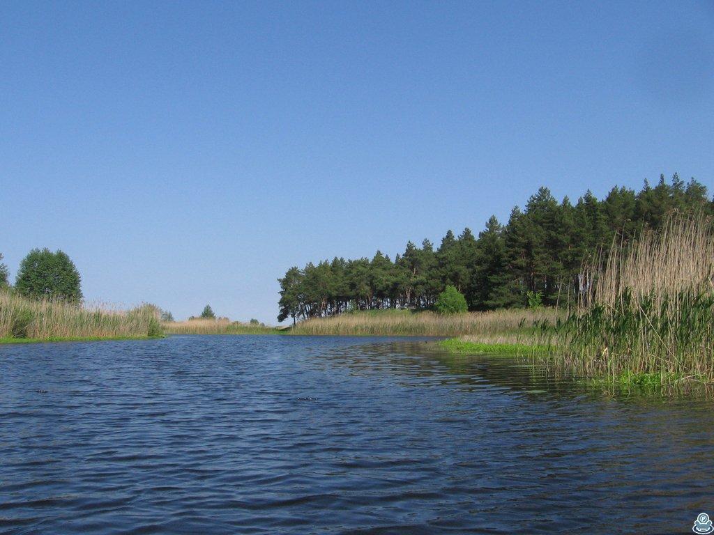 Сосновый лес над Ворсклой