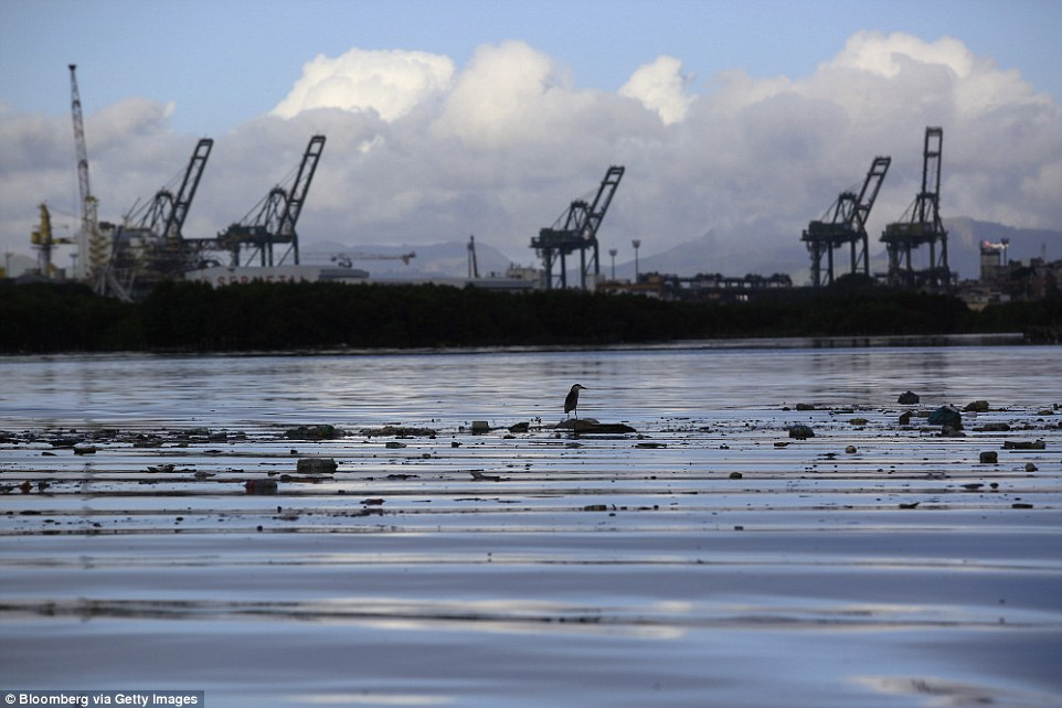 36A688E700000578-3711766-A_bird_sits_on_a_piece_of_garbage_floating_in_Guanabara_Bay_wher-a-12_1469668386067.jpg
