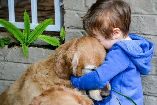 Собакам нравится, когда их обнимают