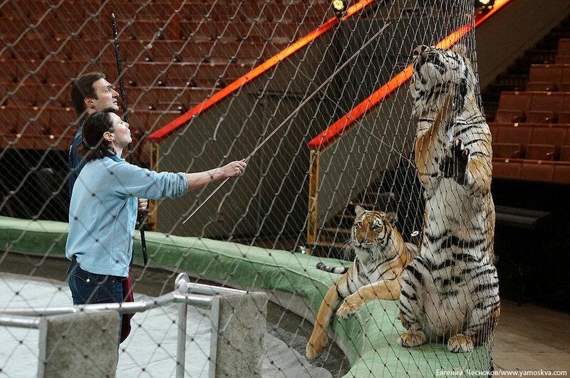 Весна. Назарова. тигры. 29.03.16.04..jpg